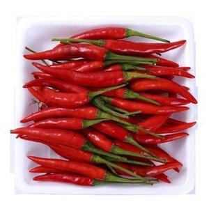 Bird Chillies Red Thailand 1pkt