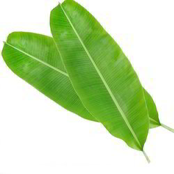 Banana Leaves 1pc