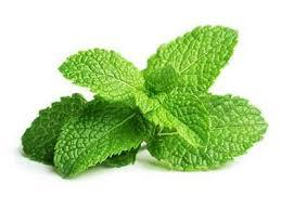 Mint Organic 500g