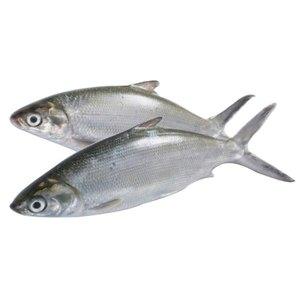 Milk Fish 500g
