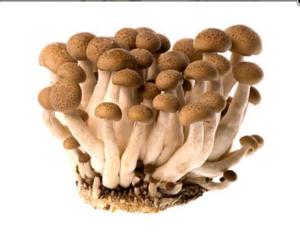 Brown Shimeji Mushroom 1pkt