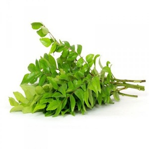 Curry Leaves 1bunch