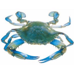 Blue Crab Female UAE 500g