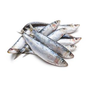 Sardines Large 7-8pcs/kg
