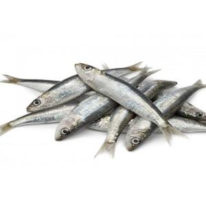 Sardines Small 20-30pcs/kg