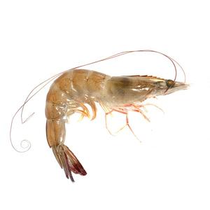 Shrimp Small 20-30pcs/kg