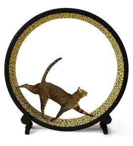 OneFastCat Exercise Wheel 5th Gen Cheetah 1pc