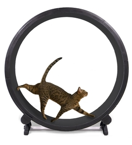 OneFastCat Exercise Wheel 5th Gen Black 1pc
