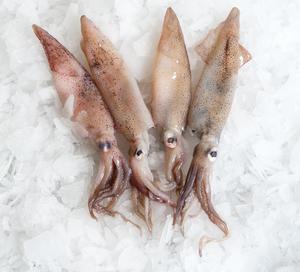 Squids Uncleaned 1kg