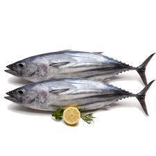 Tuna Fish Big 500g