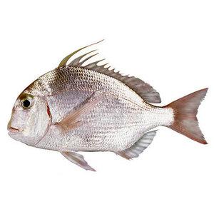Seabream Turkey 500g