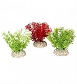 Aqua D'Ella Plant Hottonia Mixed Colors Small 1pc