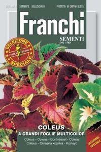 Franchi Flower Coleus Multicolor 1pc