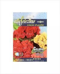 Alta Flower Celosia Cristata 1pc