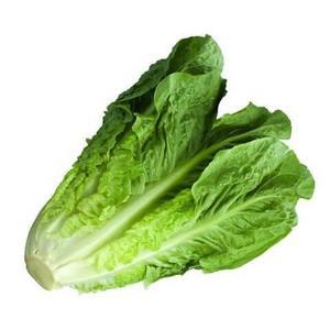 Lettuce Romaine Middle East 500g