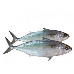 Mackerel Fish 500g
