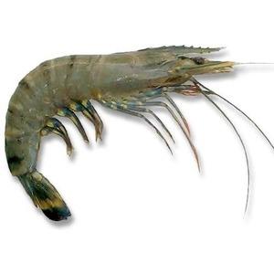Shrimps Tiger 500g