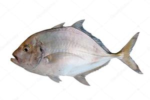 Fish Ice 1pc