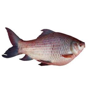Sea Bass 500g