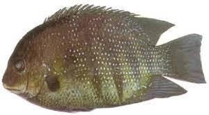 Black Pearl Spot Fish 500g