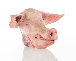 Pork Head 500g