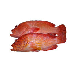 Red Hamour 500g