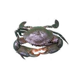 Crab 500g
