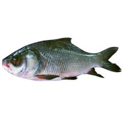 Catla Fish 500g