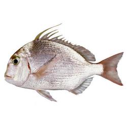 Sea Bream Small 500g