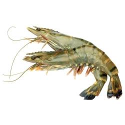 Shrimps Frsh Jumbo 500g