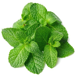 Mint Leaves 1pack
