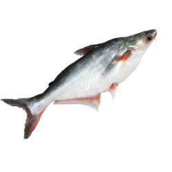 Cream Dory Fish 500g