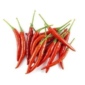 Chili Red Baby Thailand 1pkt