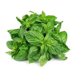 Basil Green Pots Hydrophonic 1pot