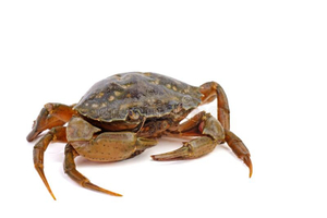 Male Crab 500g