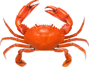 Red Crab 500g