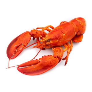 Whole Lobster Small 1pc