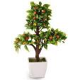 Plant Pot UAE 1pot