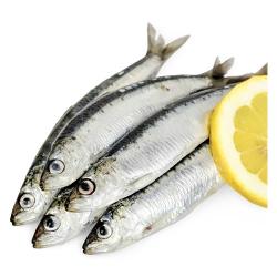 Sardines Frozen 10x1kg