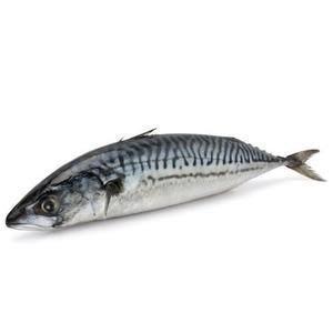 Garfa Fish 500g