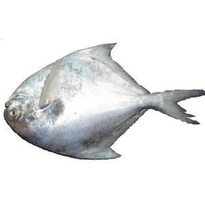 Silver Pomfert 500g