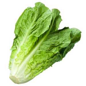 Lettuce Romaine Jordan 500g