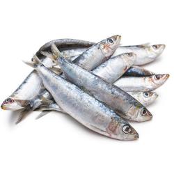 Sardine Small 500g