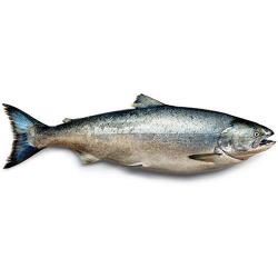 Salmon 500g