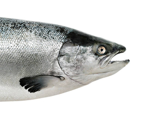 Salmon Head 500g