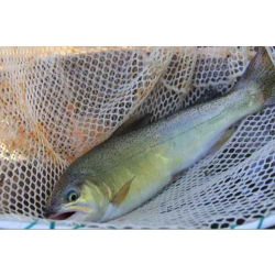 Nylon Fish 500g