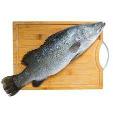 Arabian Sea Bass 500g