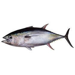 Tuna Small 1pc