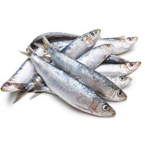 Small Sardine 500g
