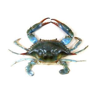 Local Blue Crab 500g
